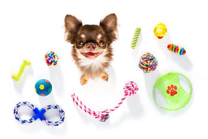 Curiosità animali: Giocattoli fai da te per cani | Focus Wild