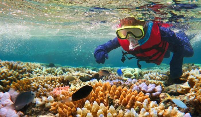 Grande barriera corallina: 10 curiosità da non perdere