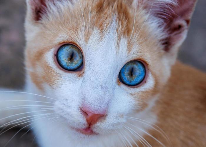 nomi del gatto