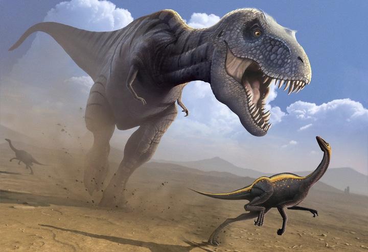 Caratteristiche e curiosità sul Tyrannosaurus Rex