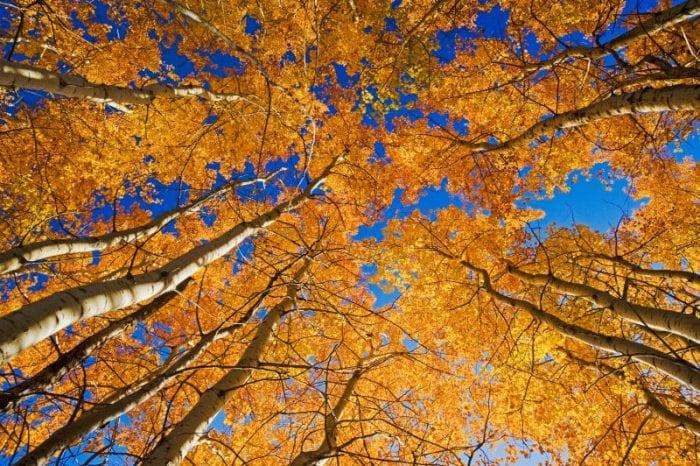 Equinozio d'autunno | Che cos'è? Quando avviene?