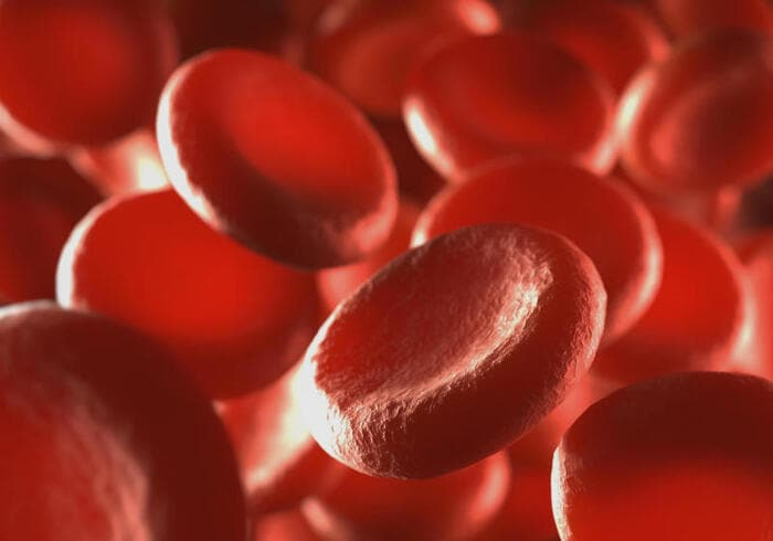 Come è fatto e a cosa serve il sangue?