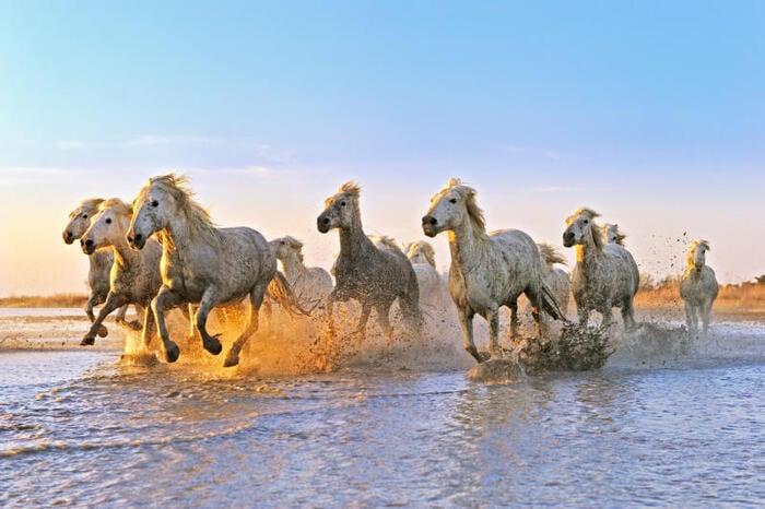 Cavalli: 5 interessantissime curiosità che forse non conoscevate