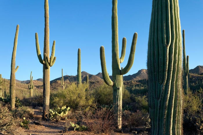 Natura: 9 interessantissime curiosità sulle piante grasse