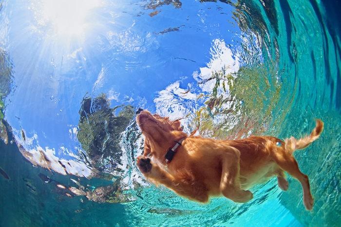 cane e l'estate