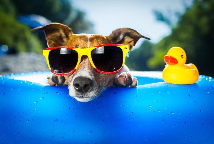 Cibo e sole: come far passare un'estate serena al tuo cane
