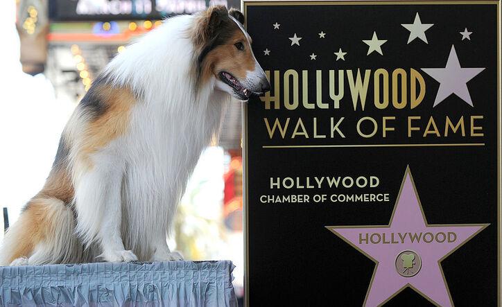 Quali sono i cani più famosi nel cinema?