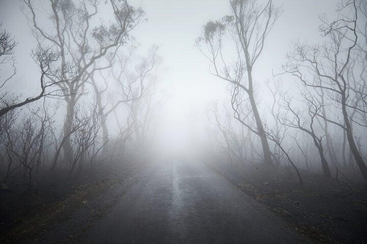 Fenomeni della natura: cos'è la nebbia?