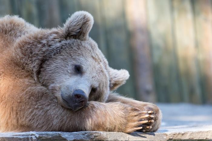 Cosa fanno gli animali nella stagione fredda? Vanno in letargo!