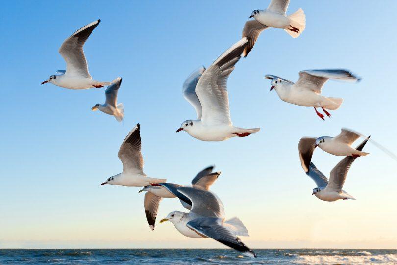Ornitofobia, ossia la paura degli uccelli