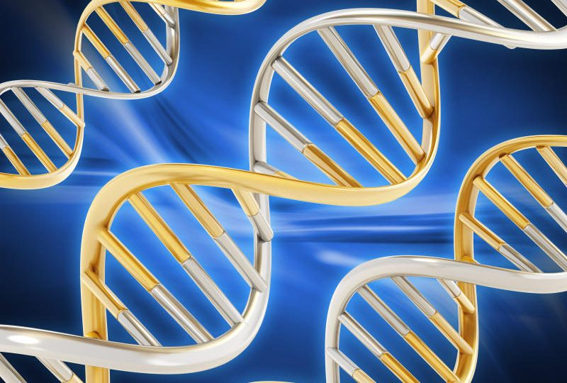 Il DNA: cos'è e cosa serve