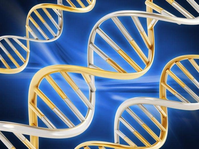 Il DNA: cos'è e cosa serve