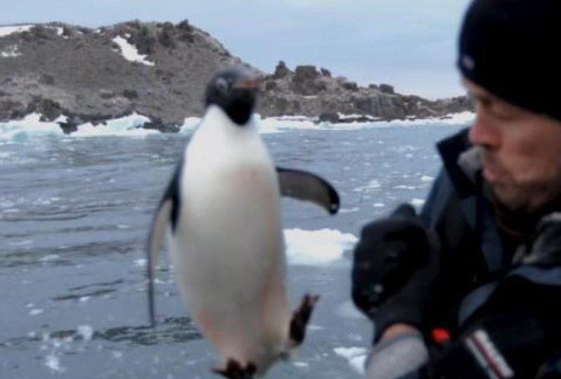 Antartide | Un pinguino salta a bordo di una barca!