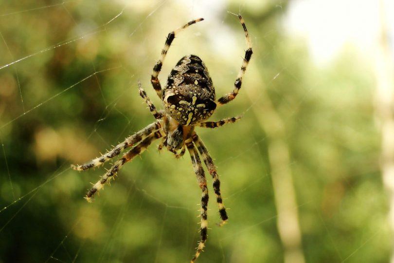 5 cose che non sai sui ragni