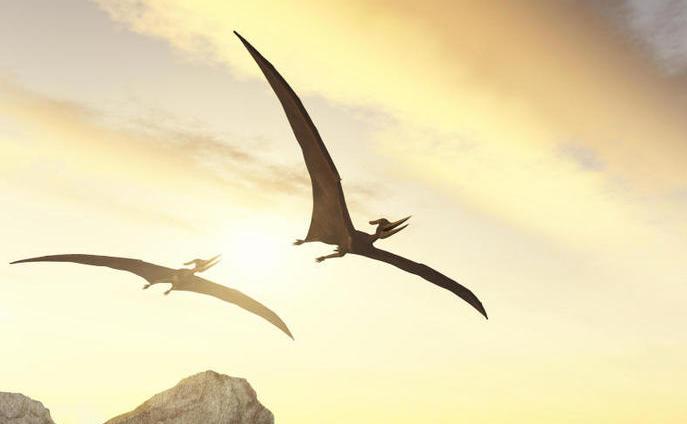 Gli pterodattili probabilmente non volavano come i pipistrelli