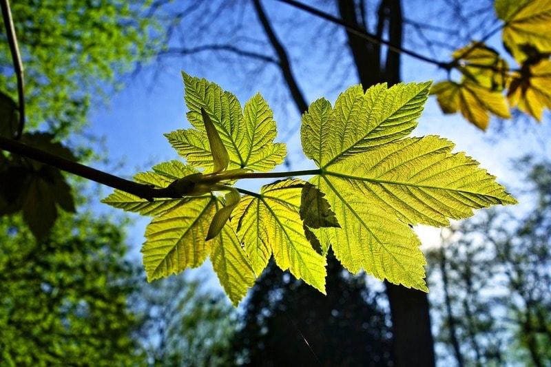 La fotosintesi clorofilliana