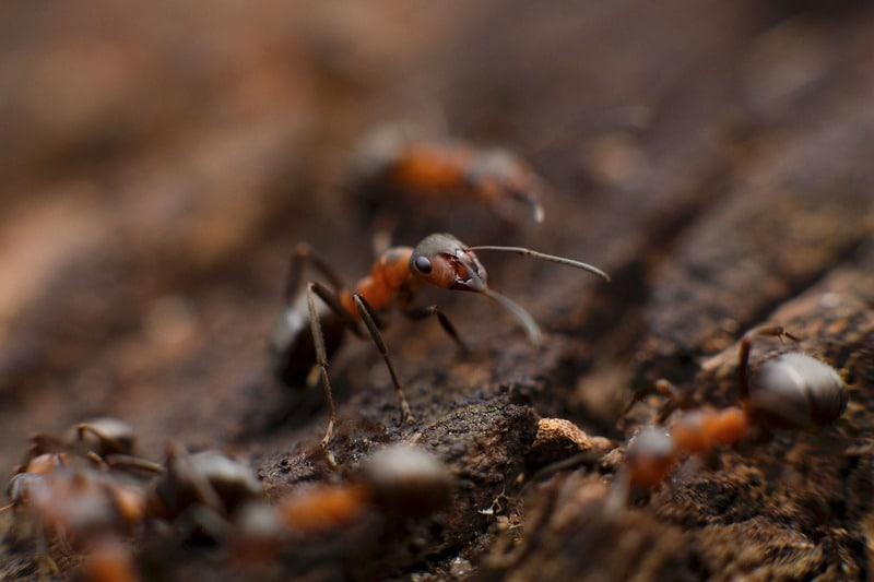 Il favoloso mondo delle formiche