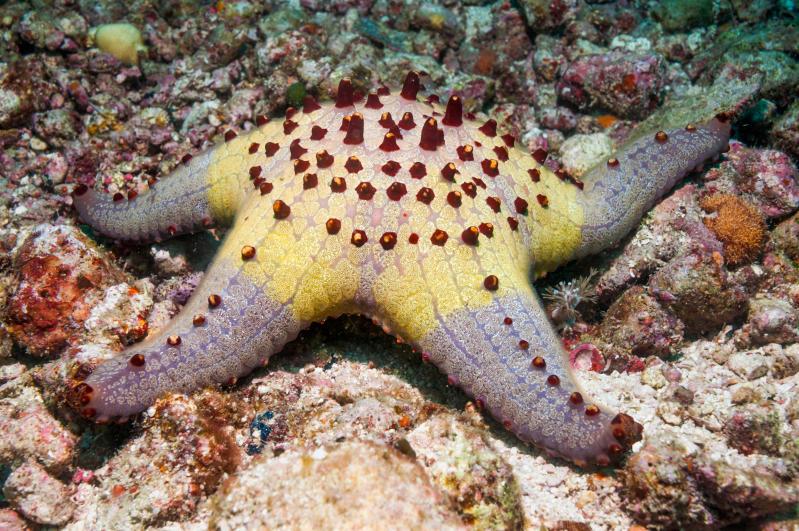 le stelle marine più belle