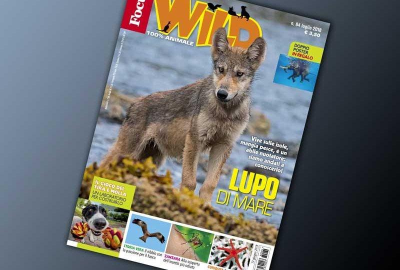 In esclusiva per voi tutti gli extra di Focus Wild n. 84!
