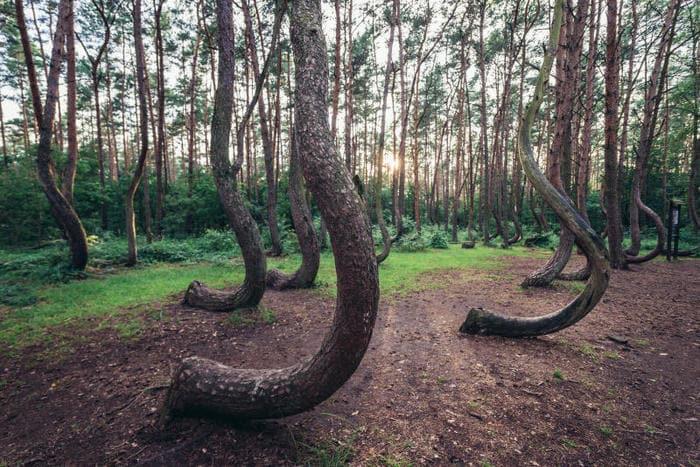 Paesaggi imperdibili: ecco le foreste più belle del mondo!