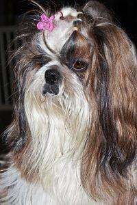 Non tagliate il pelo ai cani