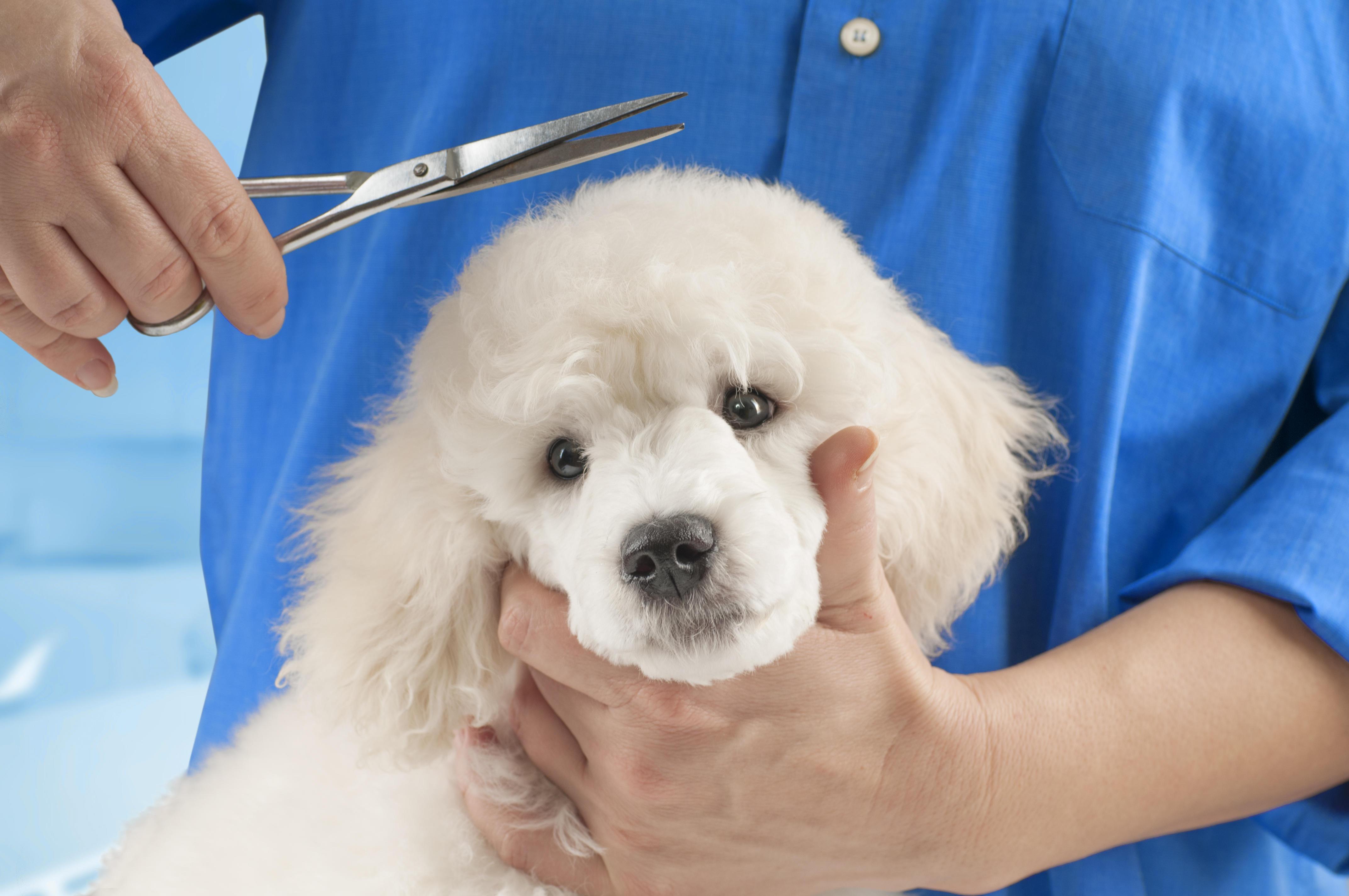 Perché non si deve tagliare il pelo del cane?