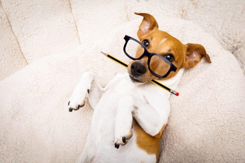 Giornata mondiale del cane in ufficio con mamma e papà