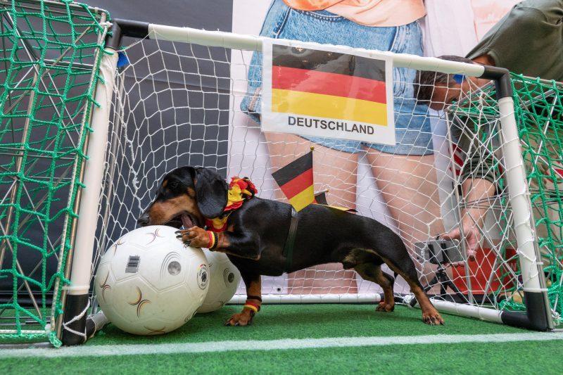 Bassotto prevede la vittoria della Germania: che cantonata!
