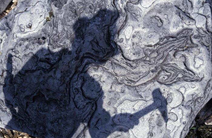 Scoperta in Cina l'orma animale più antica di sempre!