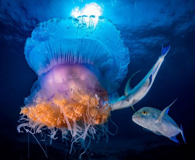 Medusa incontri