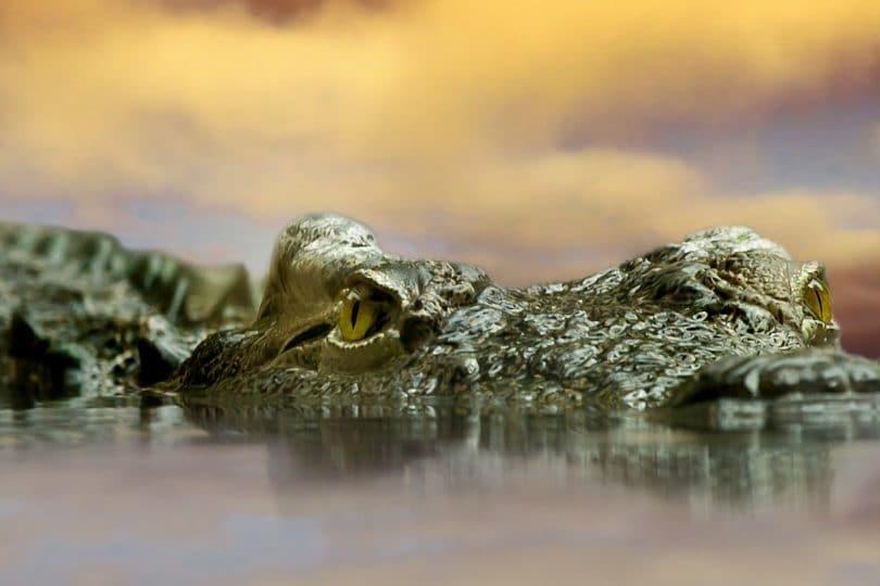 I coccodrilli preistorici erano molto diversi da quelli di oggi!