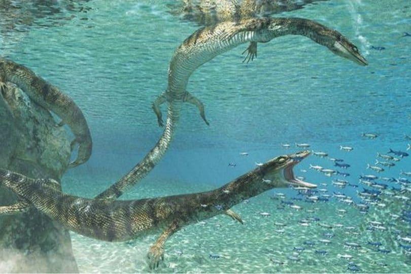 Scoperto in Puglia il fossile di un rettile acquatico di 70 milioni di anni fa!