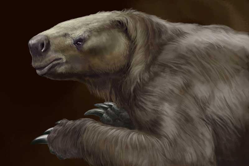L'antenato del bradipo era… velocissimo!