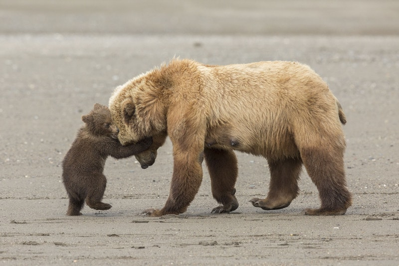 Wildlife Photographer of The Year: a Milano arrivano le foto naturalistiche più belle del pianeta!