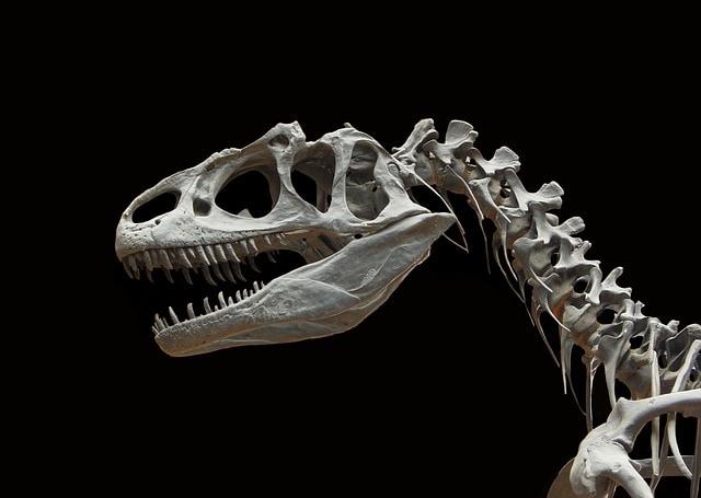 """Dinosauro """"Bruno"""": ricomposto finalmente lo scheletro"""