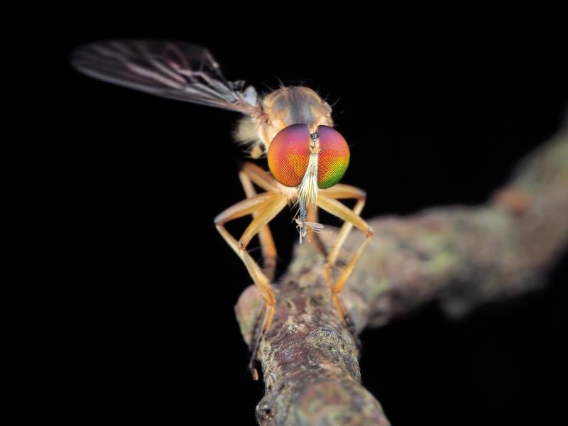 foto macro insetti