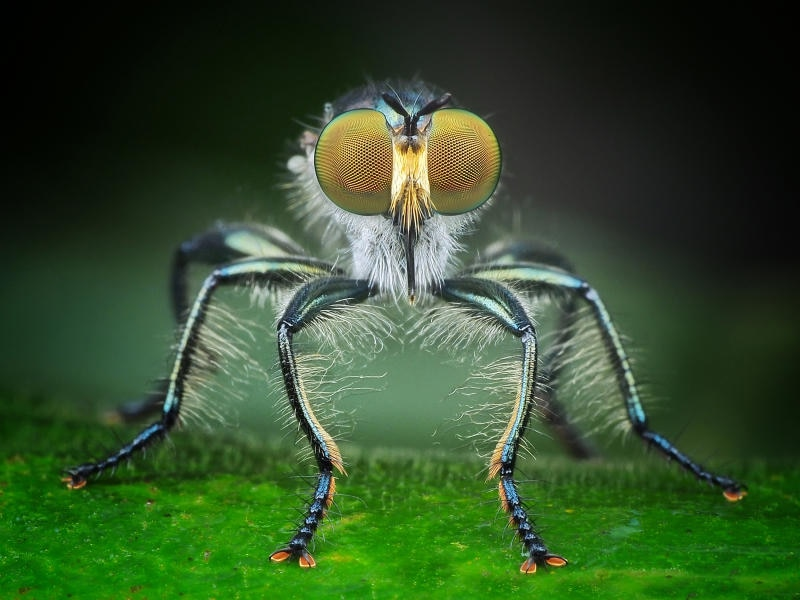 Macro fotografie di insetti in Indonesia