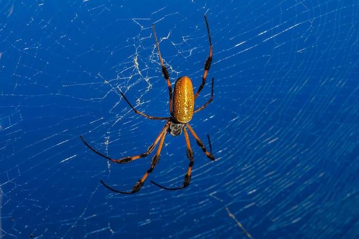 Perché i ragni non sono insetti?
