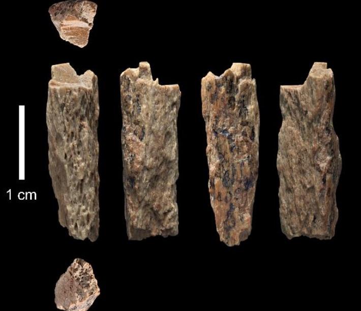 Mamma Neanderthal e papà Denisova: scoperta la prima figlia