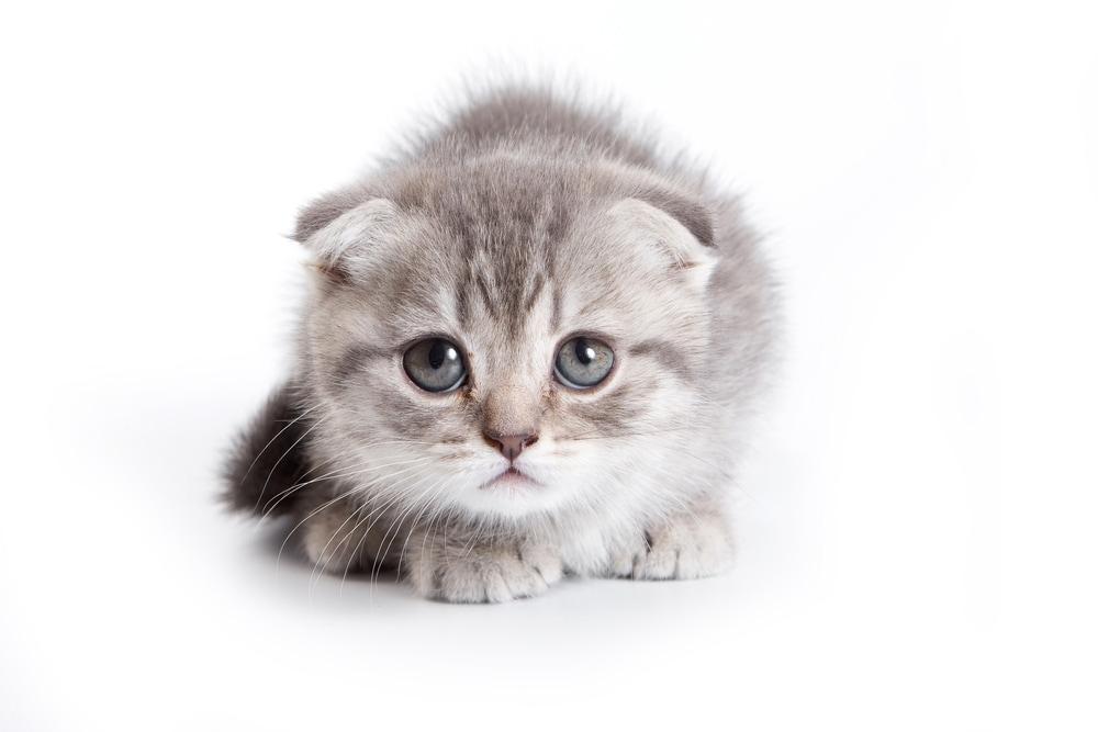 Favoloso Foto di gattini davvero piccoli - Focus Junior IU98