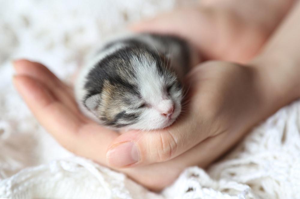 Foto di gattini davvero piccoli