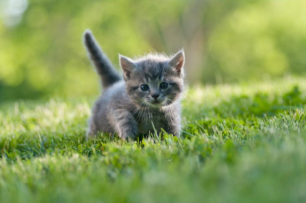 Conosciuto Foto di gattini davvero piccoli - Focus Junior DL78