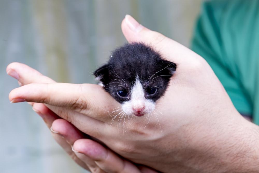 Favoloso Foto di gattini davvero piccoli - Focus Junior UX65