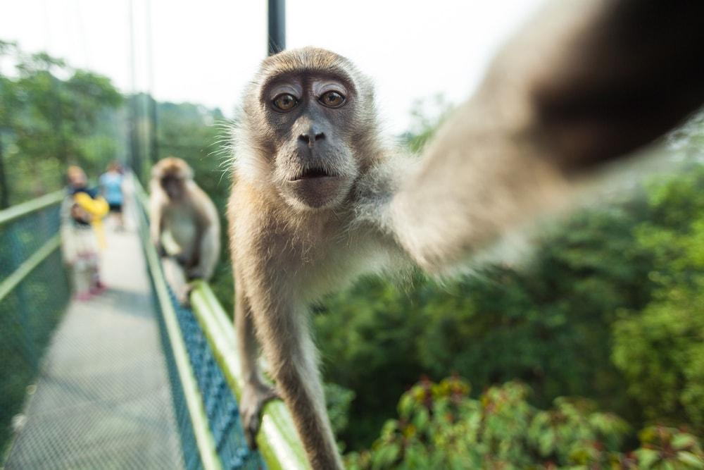 Selfie del regno animale