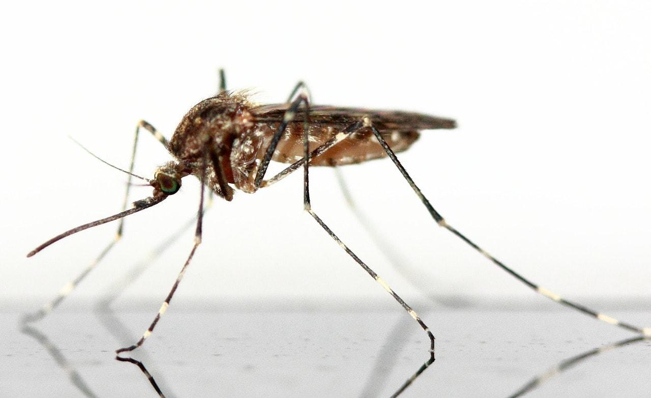 20 agosto | Giornata mondiale della zanzara!