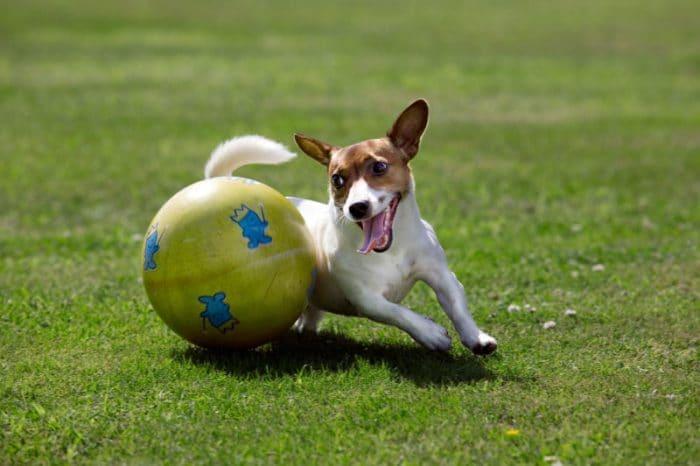Focus Wild e ZannaBianca vi aspettano in tre città con gli educatori SIUA per giocare ed imparare a conoscere meglio il tuo cane!