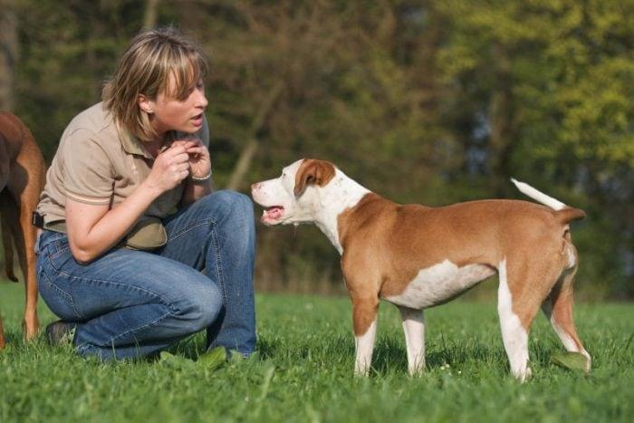 Cani: i falsi miti che ci impediscono di capirli!