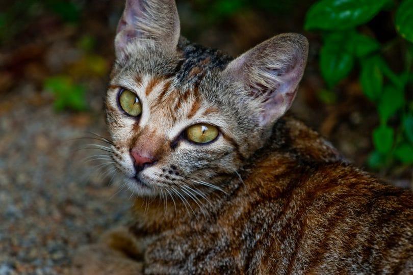 Dove vanno i gatti quando escono di casa?