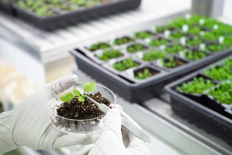 È stato rintracciato il gene che fa fiorire le piante al mattino