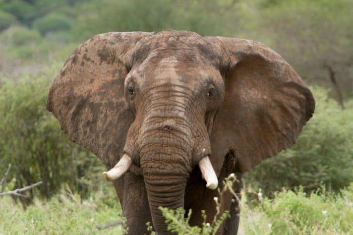 Racconti storici: l'elefante di Carlo Magno